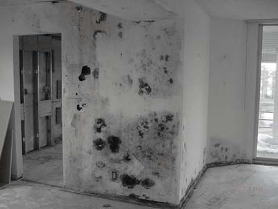 Toxic Black Mold Stachybotrys Damage In Home Resulting Remediation